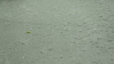 Hailstones downpour with massive rainfall hailstorm. — Stock video