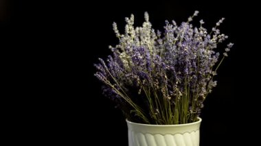Wide shoot of Lavender on black background, sliding from sides. Many people appreciate lavender for its fragrance, used in soaps, shampoos, and sachets for scenting clothes. — Stock Video