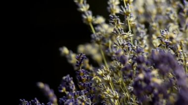Lavender on black background. Many people appreciate lavender for its fragrance, used in soaps, shampoos, and sachets for scenting clothes. — Stock Video