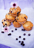 Blackcurrant muffins — Stock Photo
