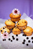 Blackcurrant muffins — Foto de Stock