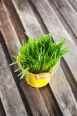 Fresh green grass in a bucket — Stock Photo