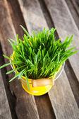 Fresh green grass in a bucket  — Stock Photo