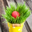 Colorful painted Easter egg on a fresh green grass — Stock Photo #42908873