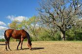 马和树 — 图库照片