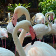 Stock Photo: Two Flamingos