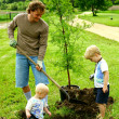Father and Children Plating Tree — Stock Photo
