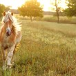 Horse Running at Sunset — Stock Photo