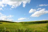 Cornfield Landscape — Stock Photo
