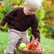 Baby Boy Grabbing Apple from Basket in Autumn — Stock Photo