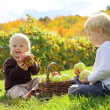 Young Children Eating Fruit at Apple Orchard — Stock Photo #32862055