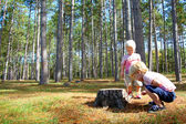 Two Young Children Exploring in Pine Tree Forest — Stock Photo