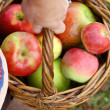 Woman's Hand Carrying Basket of Fresh Picked Apples — Stock Photo
