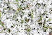Bevroren besneeuwde gras achtergrond — Stockfoto