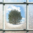 Frosted Winter Window Glass with Pine Tree Outside — Stock Photo