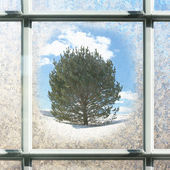 Frosted Square Winter Window Glass with Pine Tree Outside — Foto de Stock