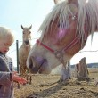 Young Child Feeding Horse on Farm — Stock Photo #44221295