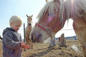 Young Child Feeding Horse on Farm — Stock Photo