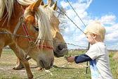 Young Child Feeding Grass to Horses on Farm — Stock Photo