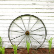 Antique Wooden Wagon Wheel on Rustic White Background — Stock Photo #48951081