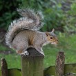 A squirrel alert — Stock Photo