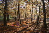 Herfst in tunstall bos, suffolk, engeland — Stockfoto