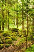Sentiero nella pineta — Foto Stock