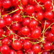 Stock Photo: Red currants background