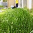 ������, ������: Grass and lawn mowing