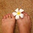 Stock Photo: White magnolion toe
