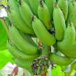 Cultivated banana — Stock Photo