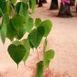 Heart-Shaped Leaf — Stock Photo
