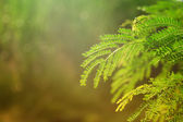 Green Leaves In Sunny Day — Stock Photo