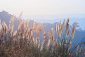 Grass And Evening Light — Stock Photo