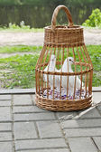 Two white pigeons in a wicker cage — Stock Photo