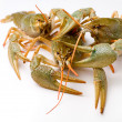 Raw crawfishes — Stock Photo