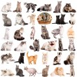 Group of cats — Stock Photo #24963777