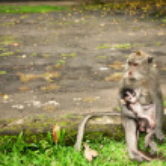 ������, ������: Monkey family