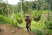 BALI- DECEMBER 29: Balinese farmer on a background of rice terra — Stok fotoğraf