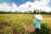 Female workers harvesting rice. Bali, Indonesia — Stock Photo