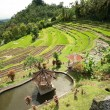 Green rice terraces. Bali, Indonesia.  — Stock Photo