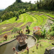 Green rice terraces. Bali, Indonesia. — Stock Photo #25882989