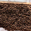 Stock Video: Hive. bees in apiary