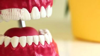 Teeth brush cleans toy jaw on table in dental surgery. Copyspace. — Stock Video