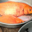 Alive freshwater fish, carps, for sale at market. — Stock Video