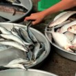 Fresh fish for sale at market — Stock Video