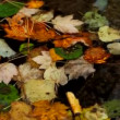 Autumn leaves floating on the water — Stock Video