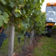 Mechanical harvesting of grapes in the vineyard — Stock Photo #32671213