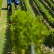 Mechanical harvesting of grapes in the vineyard — Stock Photo #32673059