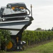 Mechanical harvesting of grapes in the vineyard — Stock Photo #32674135